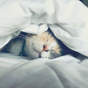 a cat lying on a bed