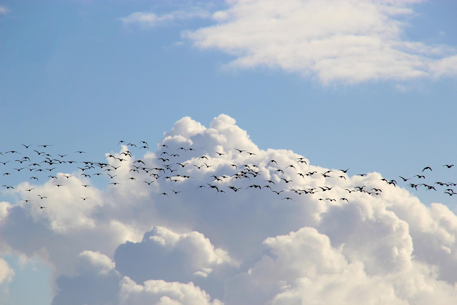 a flock of birds flying through a cloudy blue sky