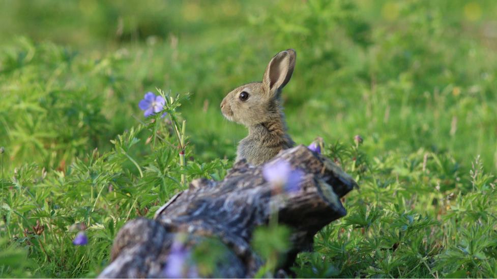 a rabbit in grass